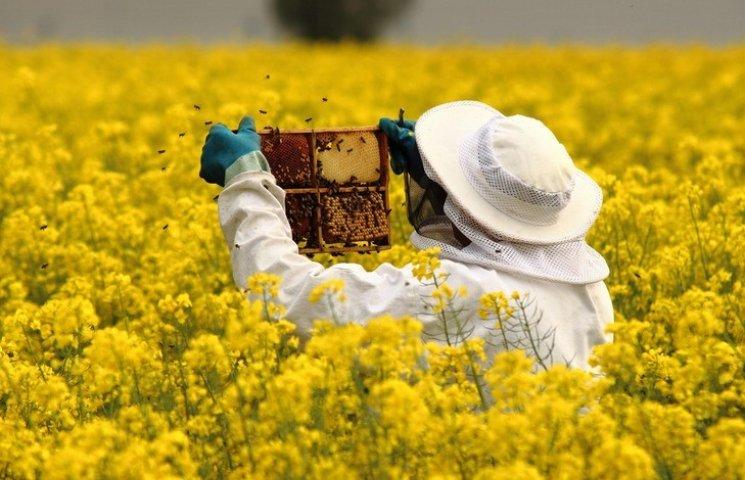 До уваги бджолярів!