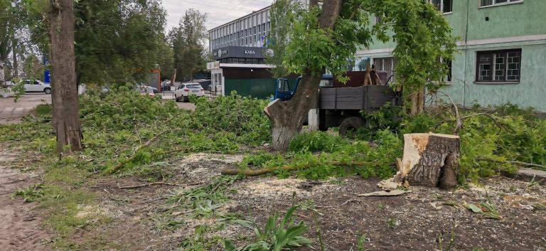 Сильним вітром в центрі Нового Бугу повалило дерева
