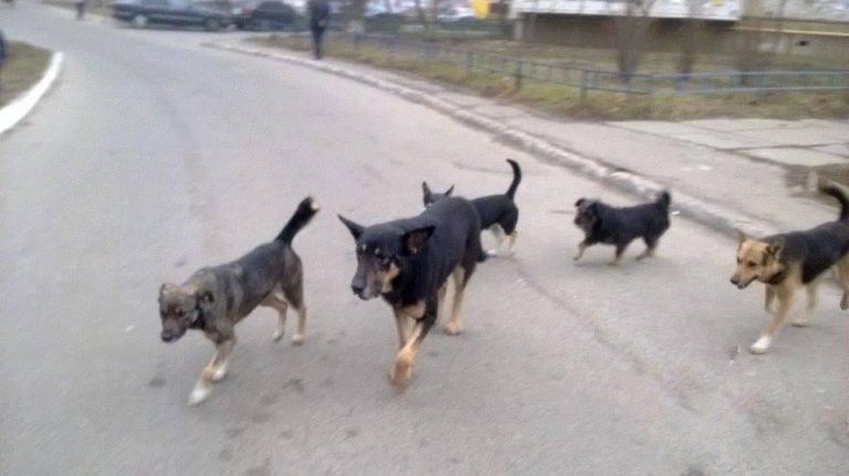 УВАГА! Проводитись відлов безпритульних собак